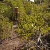 Pygmy Fringe Tree Shrine Box