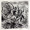 Evening primrose, woodcut