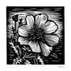 "Evening Primrose, 4x4"", woodcut"