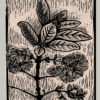 """Pygmy Fringe Tree - 9 x12"""""""