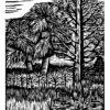 "Cabbage Palm - 8x10"""